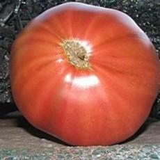 Preview tomateindianstripebursonstrain