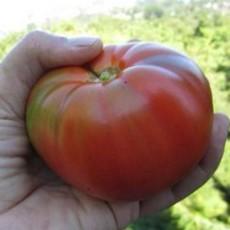 Preview tomatemoskvich2