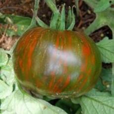 Preview tomateblackzebracherry2