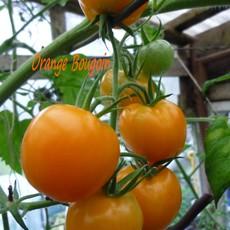 Preview orange bourgoin