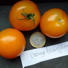 Preview orange bourgoin3