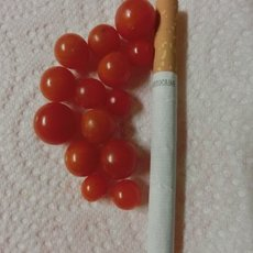 Preview sweet pea johannisbeere rot und gelb bio qualitaet 2