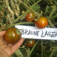 Preview braune lager