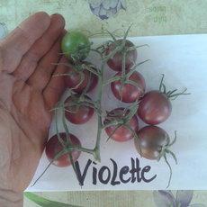 Preview violette
