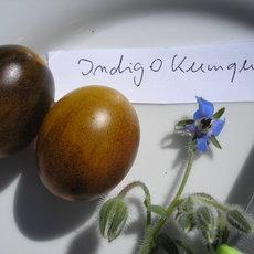 Preview indigo kumquat8