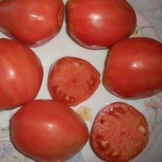Preview batyanya tomat pomidoryi opisanie sorta otzyivyi 5