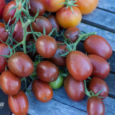 Preview ukrainian purple tomate