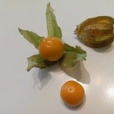 Preview preview physalis selbstgewonnen 1