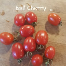 Preview bali cherry