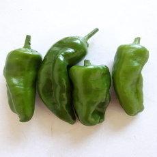 Preview pimientos de padron chili