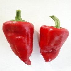 Preview leutschauer schotenpfeffer chili