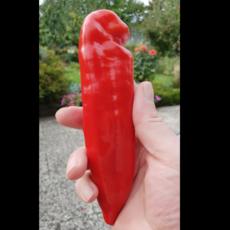 Preview spitzpaprika gro%c3%9f
