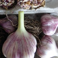 Preview knoblauch