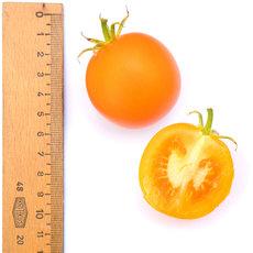 Preview 279 prenau orange