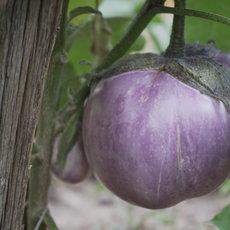 Preview aubergine beatrice