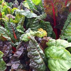 Preview swiss chard 2858689  340