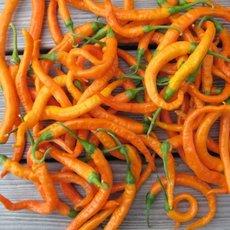 Preview chili turuncuspiral 10