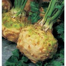Preview groentezaden knolselderij j0817