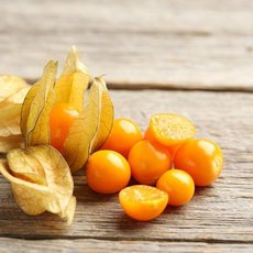 Preview physalis 29645 1x1 n